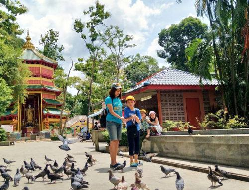 Jungle Tour Hot Spring & Emerald Pond