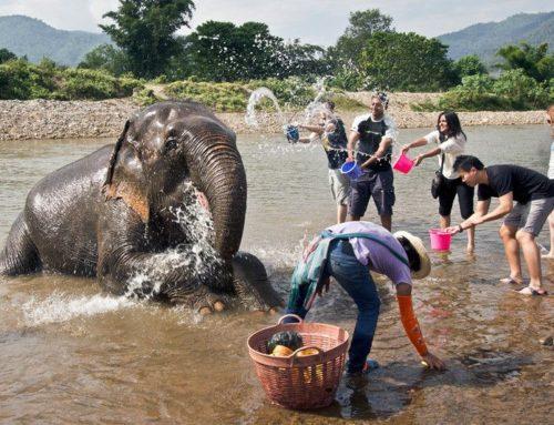 KHAO LAK EXPLORER 3 in 1  ELEPHANT BATH – SEA TURTLE – BAMBOO RAFTING