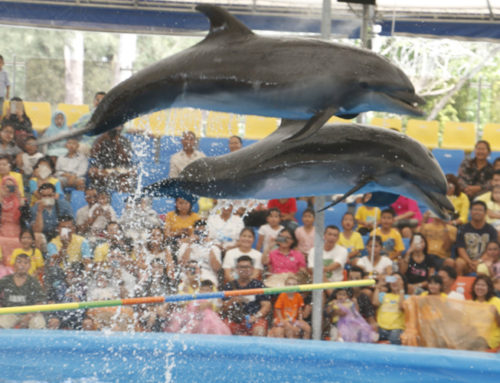 Dolphins Show VVIP Seat