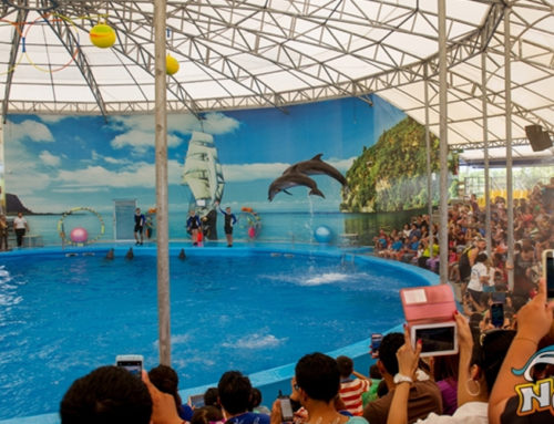 Dolphins Show Deluxe Seat