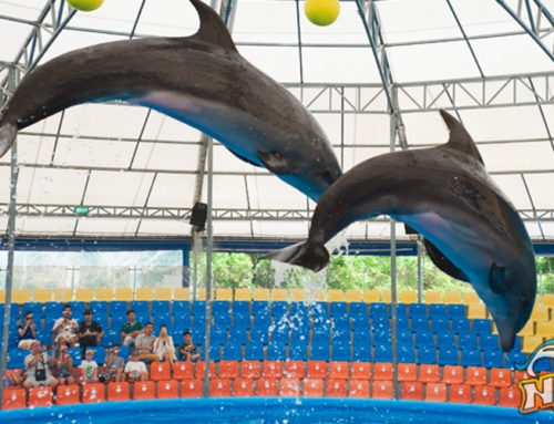 Dolphins Show Regular Seat